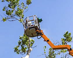 Tree Service in Wilson County