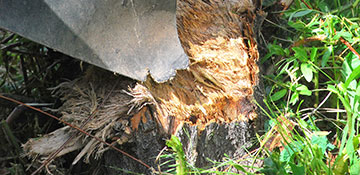 Lee County Stump Grinding