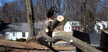 Tree Removal Oakland County, MI