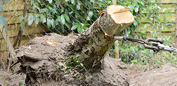 Oakland County Tree Stump Removal