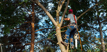 Tree Trimming Wilson County, TX