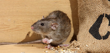 Franklin County Rodent Control