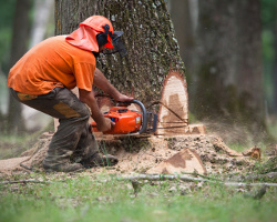 Tree Removal in Tuscaloosa County