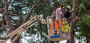 Tree Service Bexar County, TX